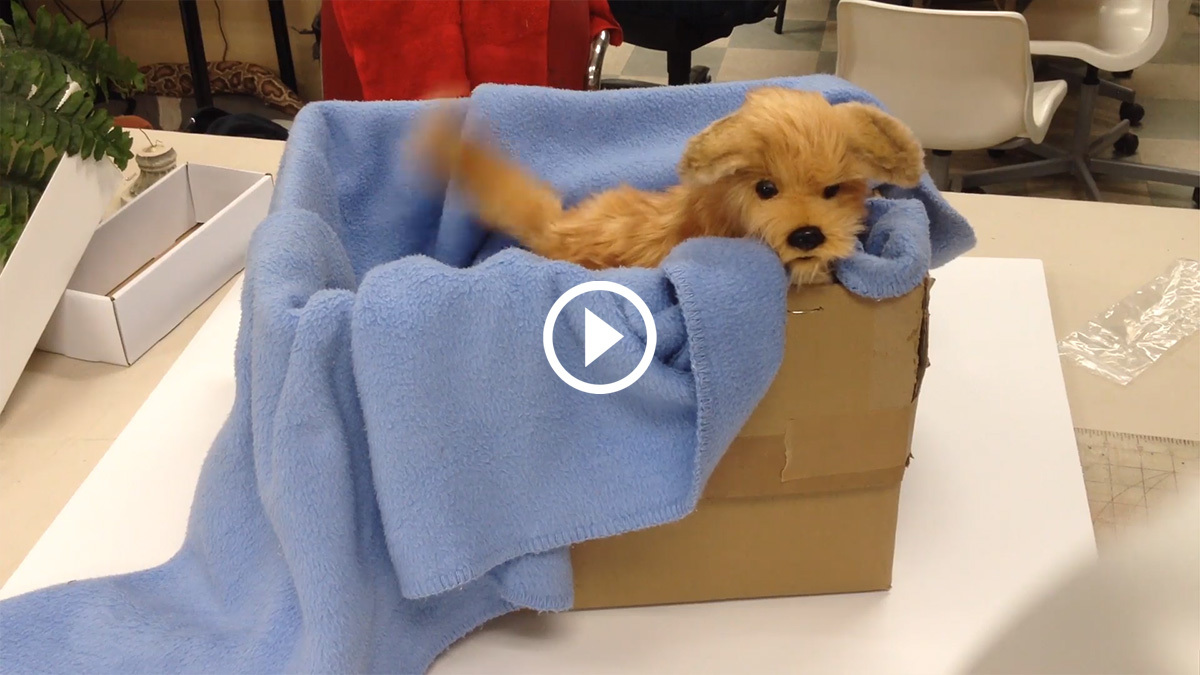 Puppy Video Preview 1200